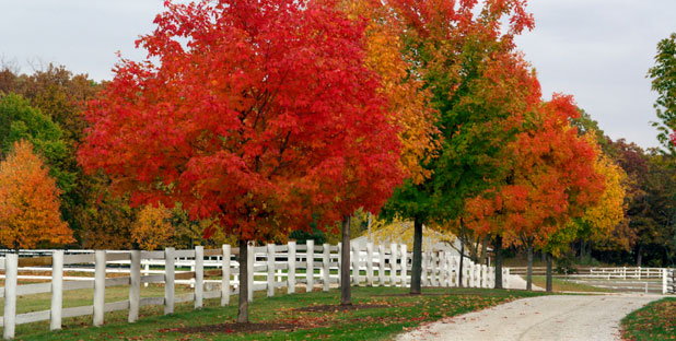Autumn-Horse-Farm