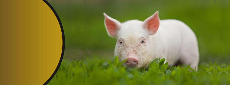 slider-piggy
